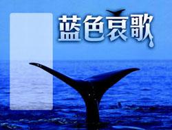 鲜美鲸肉背后是惨无人道的屠杀